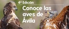 IV Edición: Conoce las Aves de Ávila