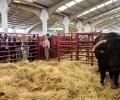 Foto de La Diputación de Ávila promociona su sector ganadero y agroalimentario en Salamaq'17