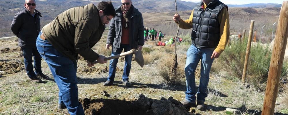 La Diputación de Ávila celebra el Día del Árbol con una plantación de medio millar de árboles en Navalosa