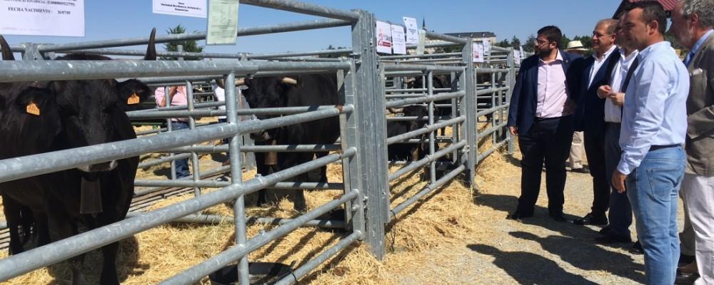 La Diputación de Ávila lleva media docena de reses de su ganadería al Concurso-Subasta Nacional de Raza Avileña-Negra Ibérica