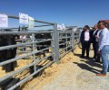 Foto de La Diputación de Ávila ayuda con 70.000 euros a la celebración de ferias ganaderas y agroalimentarias y a asociaciones de ganado selecto