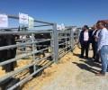 La Diputación de Ávila ayuda con 70.000 euros a la celebración de ferias ganaderas y agroalimentarias y a asociaciones de ganado selecto