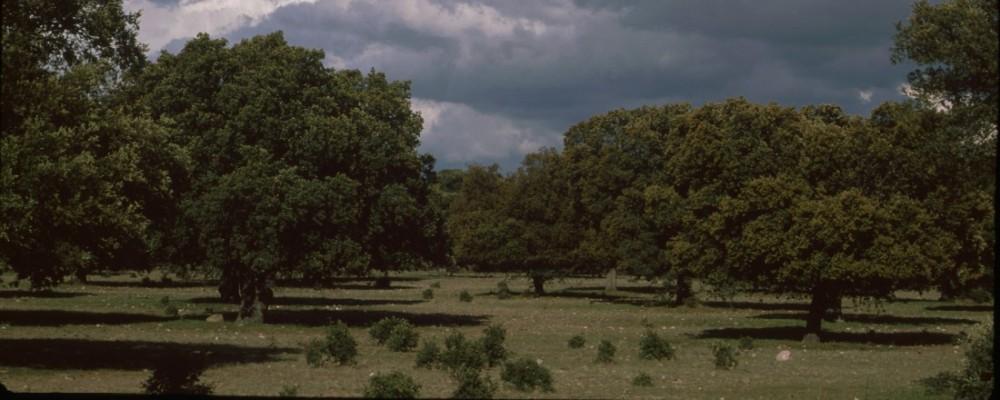 La Diputación propone sembrar 17.500 plantas a través de un nuevo formato de 'Día del árbol'