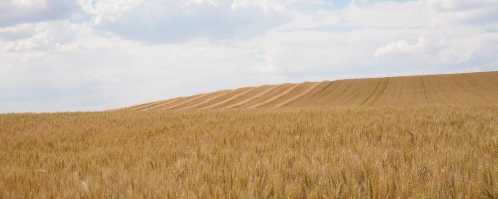 La Diputación subvenciona actividades o estudios sobre el sector agroganadero y el mundo rural abulense