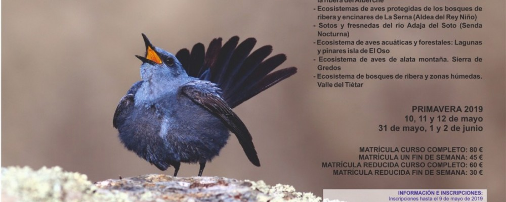 Abierto el plazo de inscripción para el curso 'Conoce las Aves de Ávila', que se celebrará los meses de mayo y junio