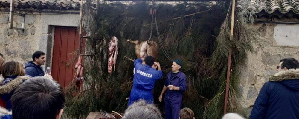 Navaluenga y Martiherrero reviven la matanza con el objetivo de que las nuevas generaciones no olviden esta tradición