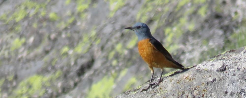 Más de veinte aficionados a las aves conocen las especies abulenses de la mano de la Diputación