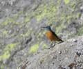 Foto de Más de veinte aficionados a las aves conocen las especies abulenses de la mano de la Diputación