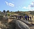 Foto de Se cierra la campaña de excavaciones en Ulaca tras más de cinco semanas de trabajos e inversión récord