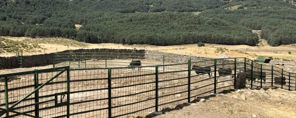 La Diputación celebra la subasta de ganado avileño de 'El Colmenar' el 8 de mayo