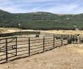 Foto de La Diputación celebra la subasta de ganado avileño de 'El Colmenar' el 8 de mayo