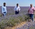 Foto de La Diputación se interesa por el modelo agroturístico del cultivo de la lavanda en Brihuega