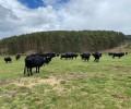 Foto de La ganadería de El Colmenar participa en la Feria Salamaq con siete reses