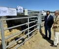 Foto de El presidente llama a colaborar con la ganadería en la inauguración del Concurso-Subasta de Raza Avileña-Negra Ibérica