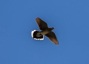 La VII edición de 'Conoce las aves de Ávila' se cierra con el avistamiento de cerca de cien especies (4º Fotografía)