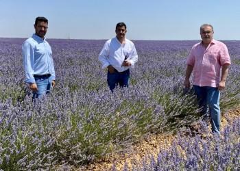 La Diputación se interesa por el modelo agroturístico del cultivo de la lavanda en Brihuega
