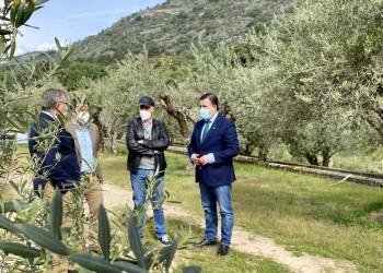 El presidente felicita a las almazaras del Tiétar reconocidas en los Premios Mezquita de aceite de oliva